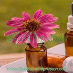 💐 Las Flores de Bach, eficacia demostrada para tratar la depresión © [Actualizado 2.019]