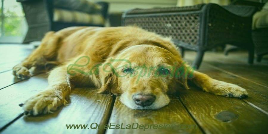 Perro deprimido y triste